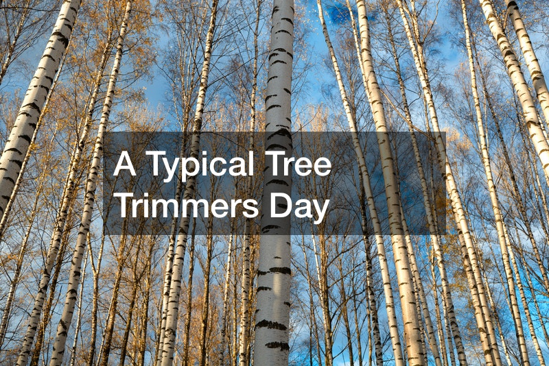 a typical tree trimmers day